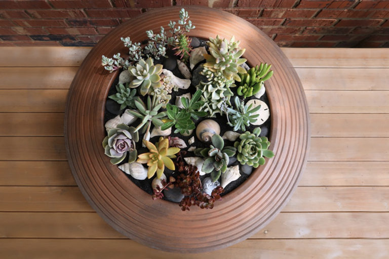 Bowl with succulents