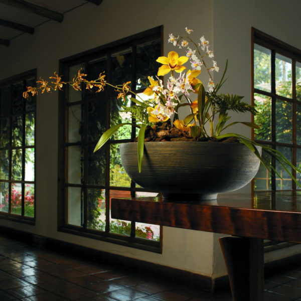 Orchid Display in Orinoco Bowl